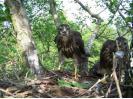 Pohled na hnízdo káně lesní