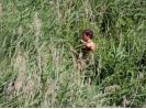 Hledání hnízd motáků pochopů