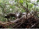Hnízdo motáků na nízkém stromě