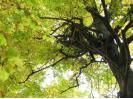Vojta v koruně stromu